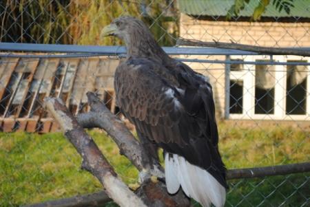 Станция натуралистов в ульяновске орнитологи